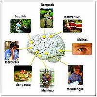 Meningkatkan Kemampuan Otak